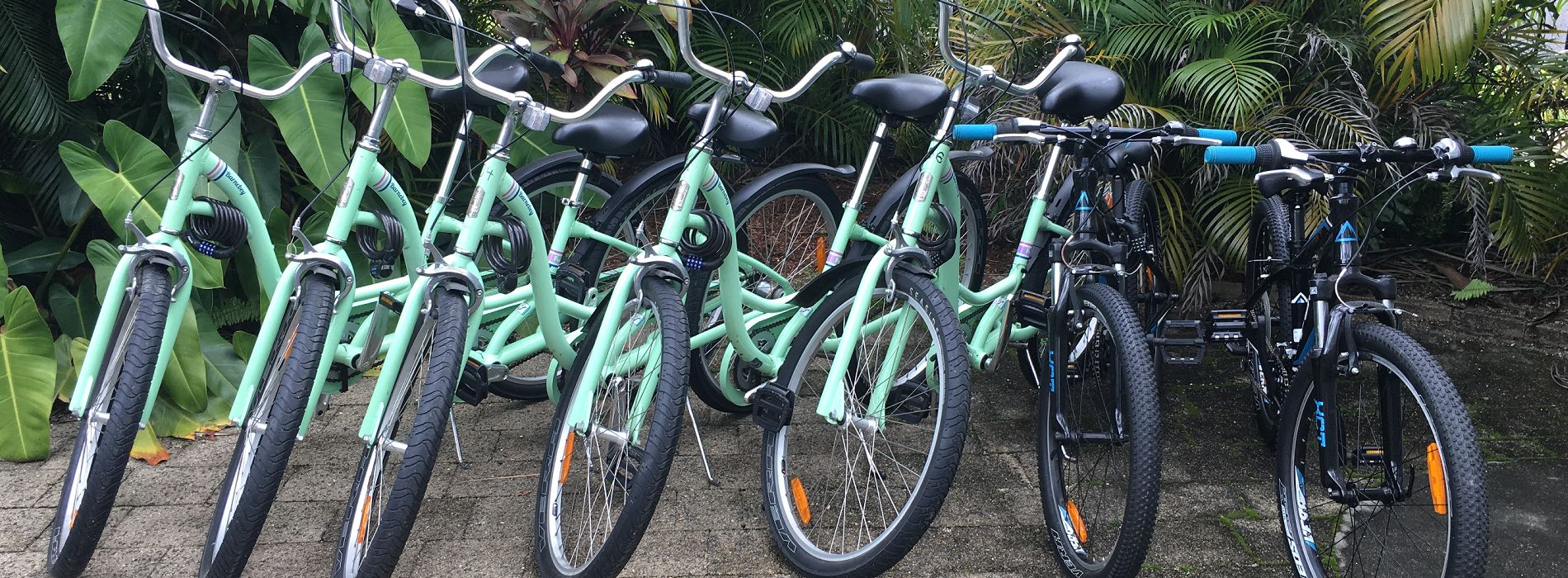 Cairns Holiday Apartments Oasis Inn Cairns Bike Hire